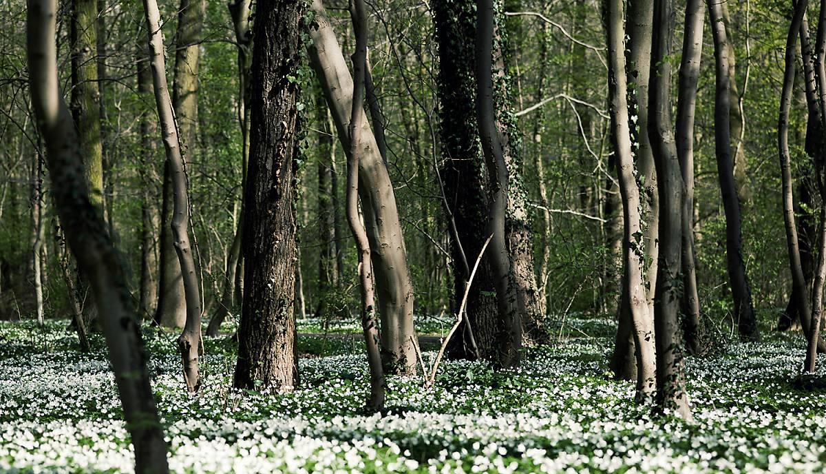 Der Lebensraum des Luchses ist der Wald.