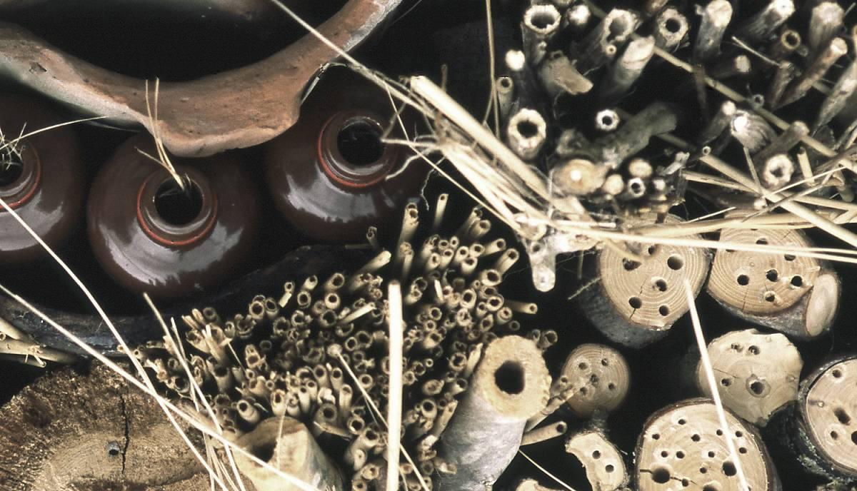 Verschiedene Röhren als Wildbienennisthilfe