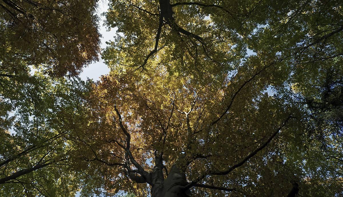 Eine Baumkrone im Wald