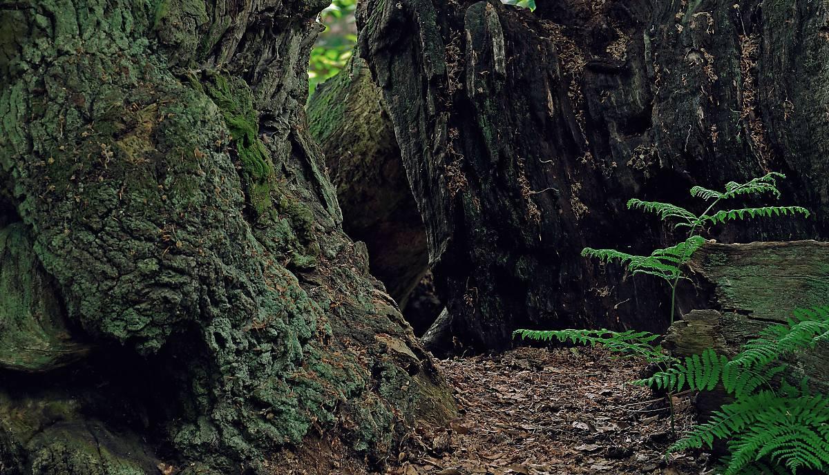 Totholz bietet zahlreichen Tieren Lebensraum.