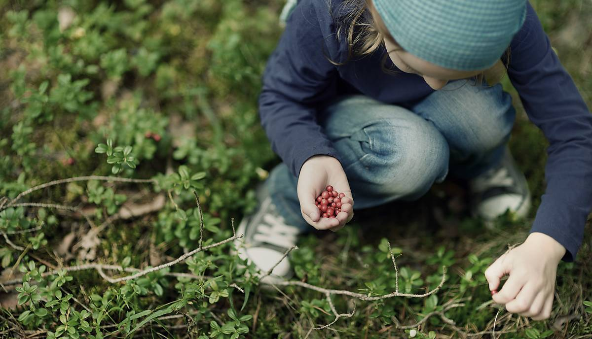 Kind sammelt Beeren