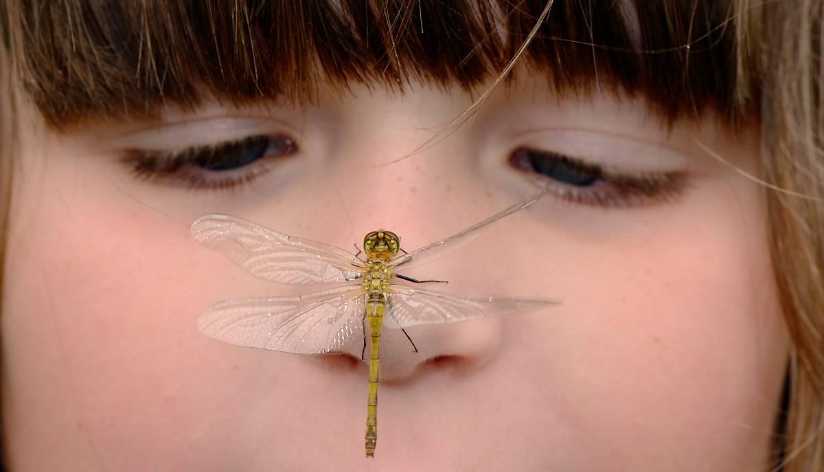 Kind mit Insekt auf der Nase