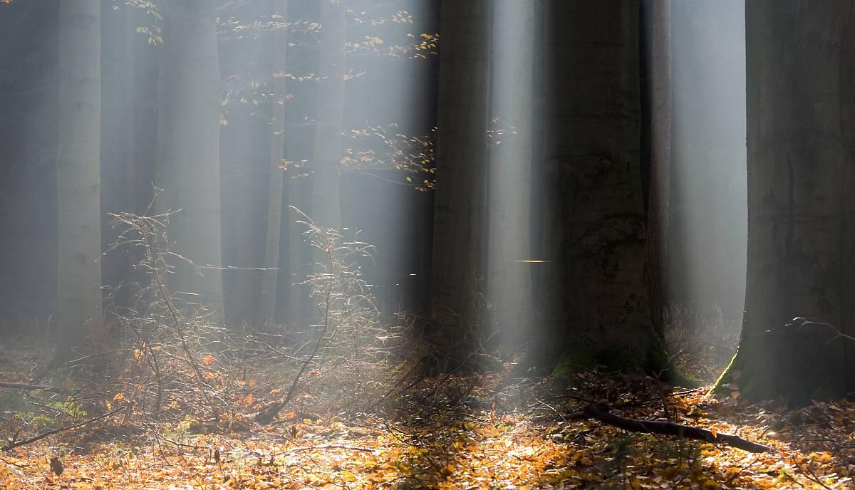 Waldbäume-im-Herbst