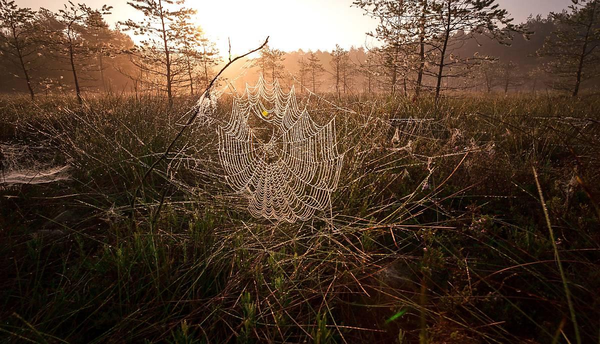 Spinnennetz-im-Moor