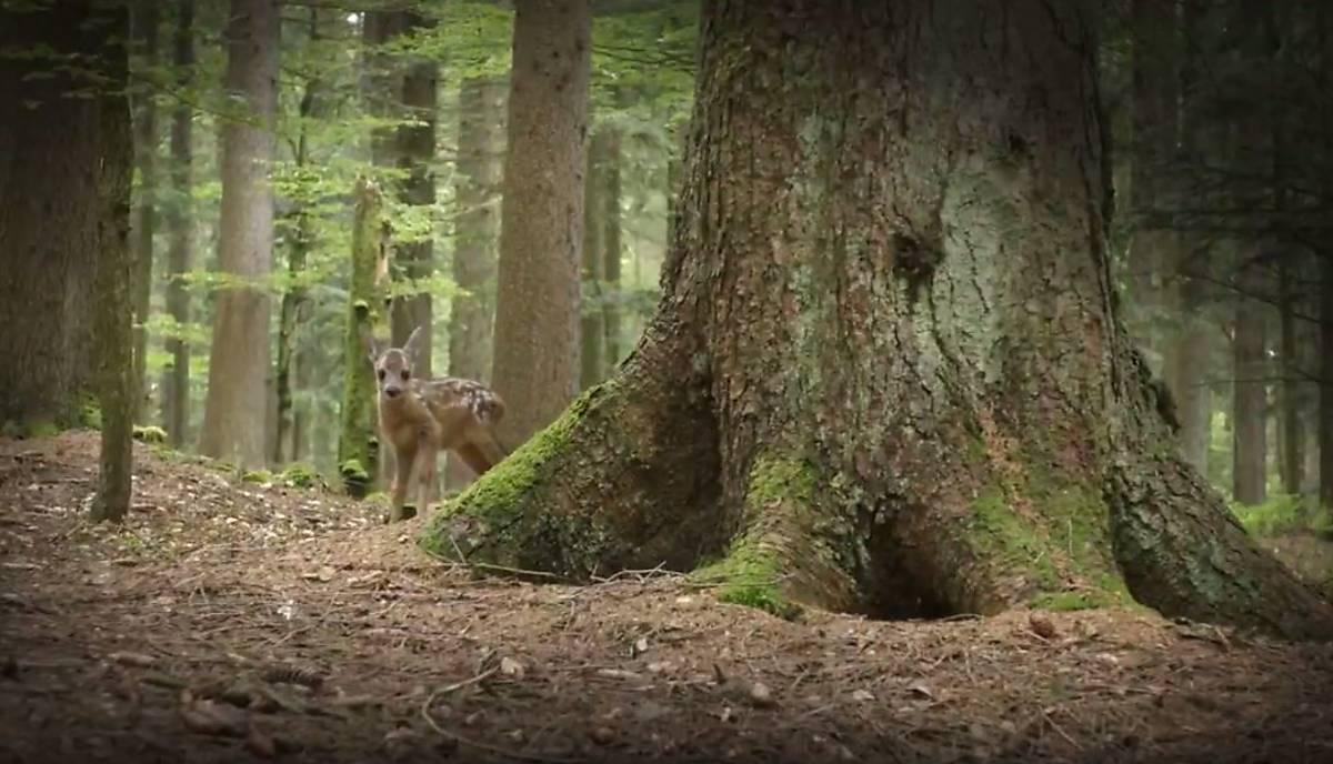 trailer-die-wahre-geschichte-von-bambi