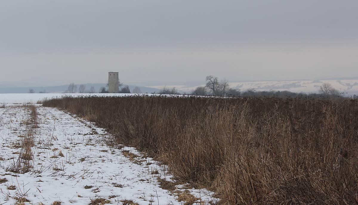 Winterlebensraum für Rebhühner und andere Feldvögel in der Nähe bei Göttingen