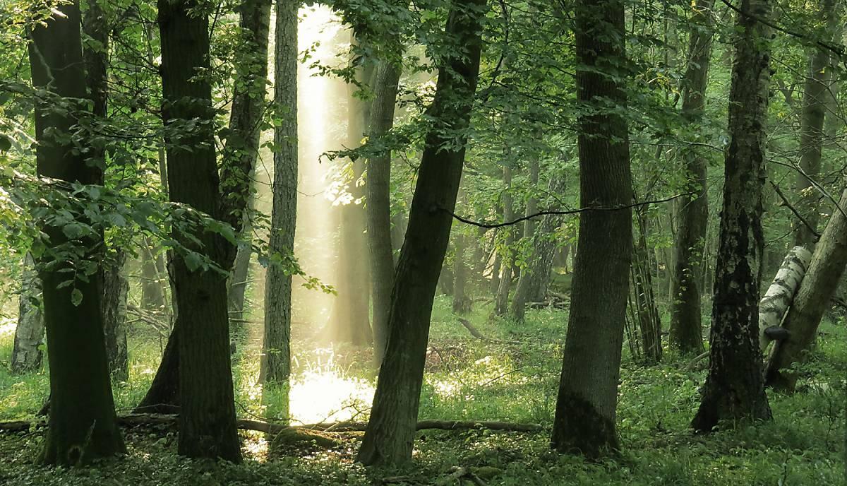 Mit Ihrer Spende unterstützen Sie unser Engagement in der Forstpolitik.