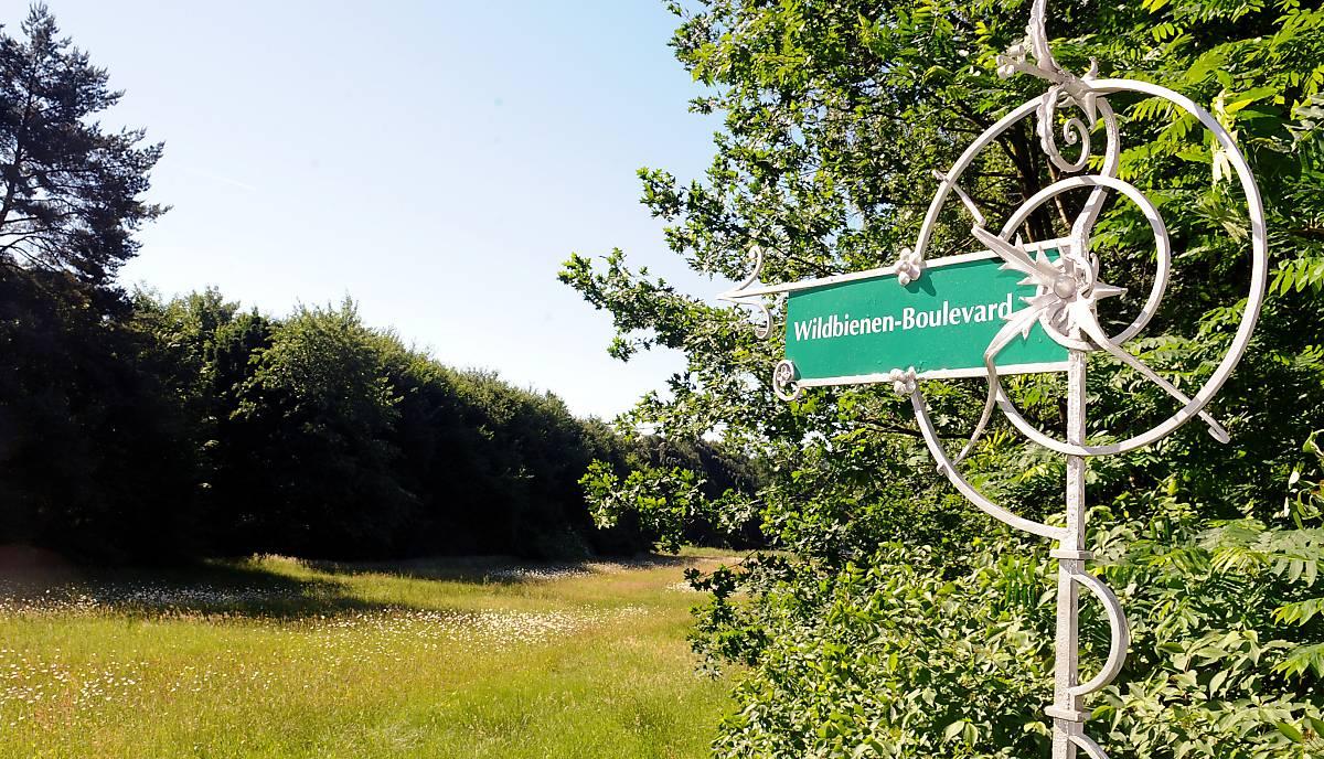 Wildbienen-Boulevard auf dem Ohlsdorfer Friedhof (Foto: Karin Costanzo)