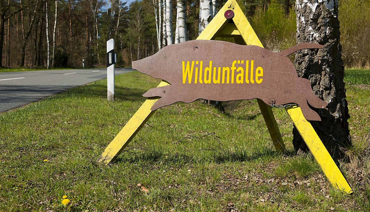 wildunfaelle-fullscreen