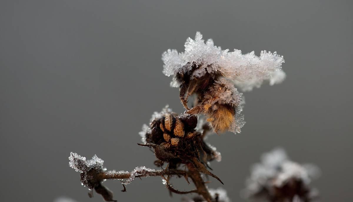 biene-gefroren-winter
