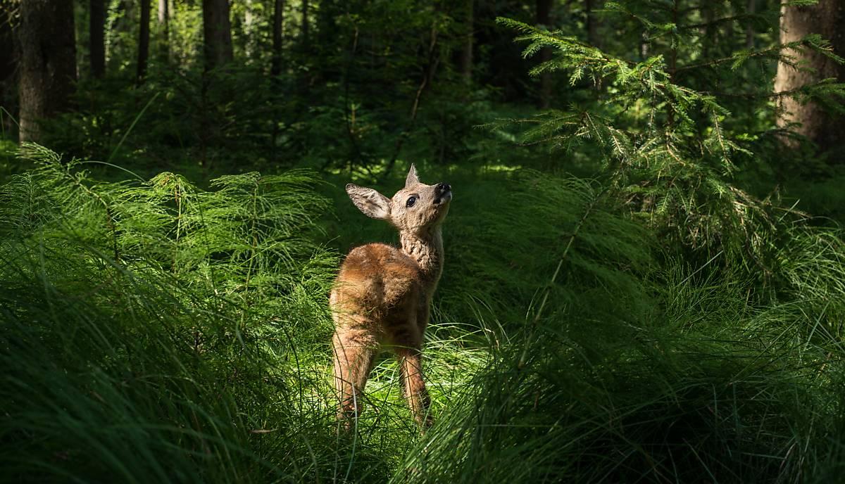 sexpistolen, die bambi getötet haben