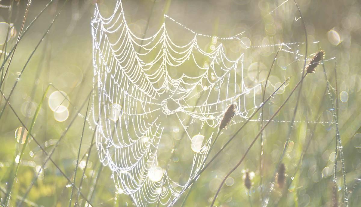 spinnennetz-klein-copyright-jan-haft
