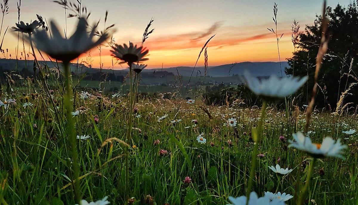 Wiese in der Abenddämmerung - Copyright © nautilusfilm / polyband Medien GmbH