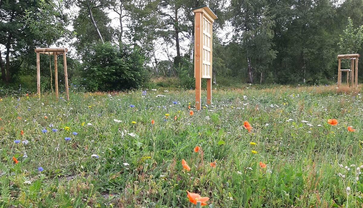 Blühwiese mit Wildbienenhotels.