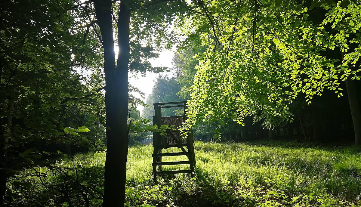 Hochsitz am frühen Morgen. Das Nachtjagdverbot wird von der Behörde festgelegt. Gejagt werden darf (mit Ausnahme von etwa Schwarzwild) 90 Minuten vor Sonnenaufgang und 90 Minuten nach Sonnenuntergang. Foto: Calvi