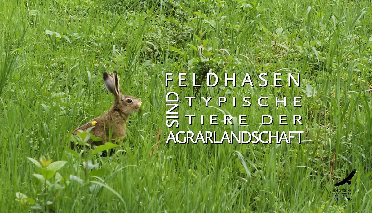 frame_video_feldhase-start-text