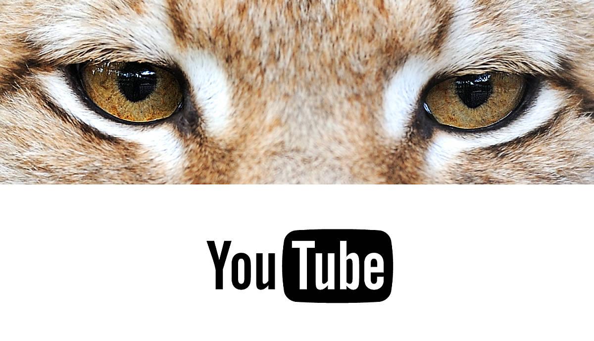 youtube-teasermotiv