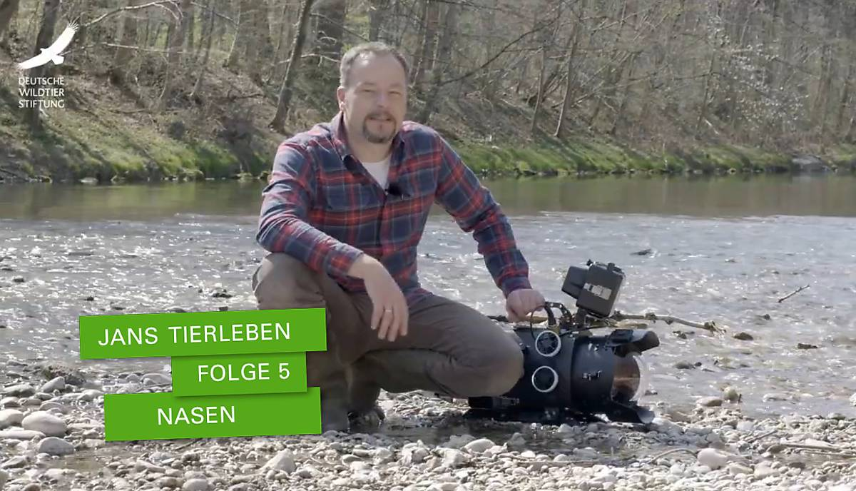 jans-tierleben_folge-5_nasen_bsp-3