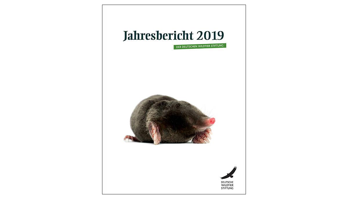 cover_jahresbericht-2019