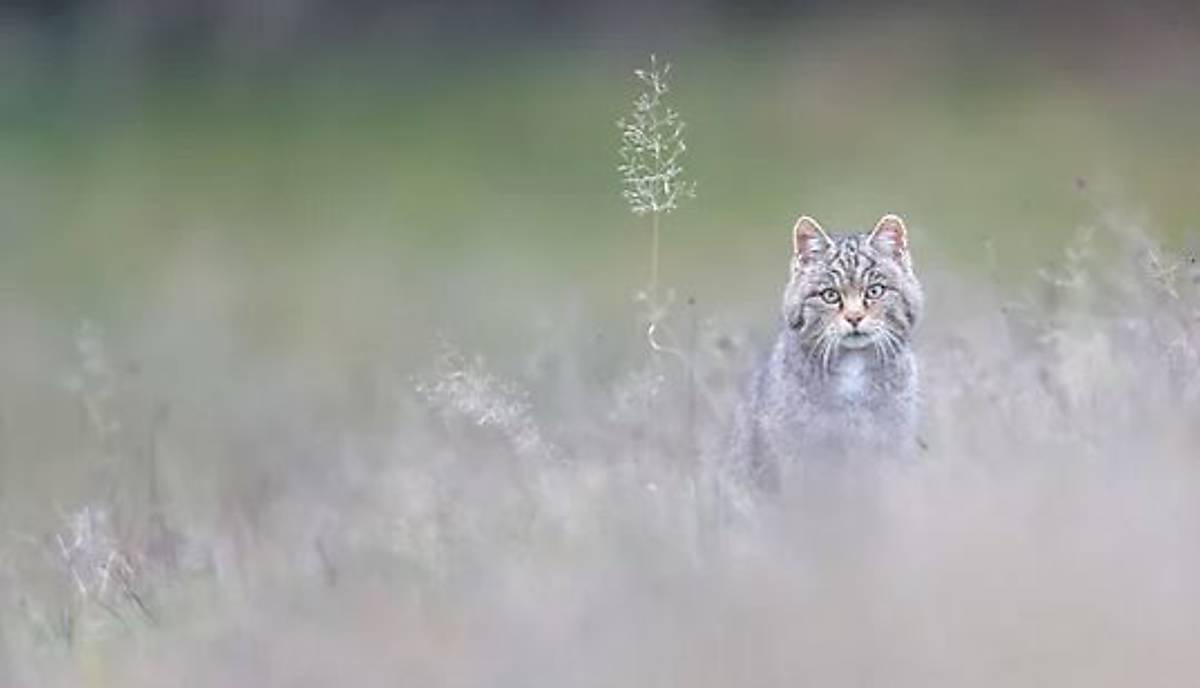 wildkatze-blog