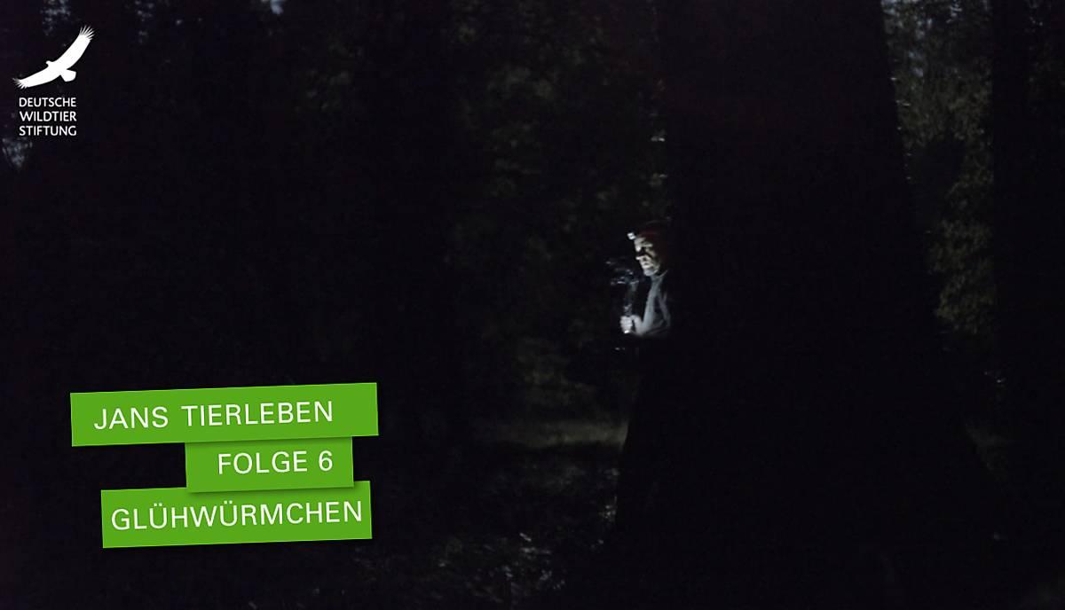 jans-tierleben_folge-6_gluehwuermchen