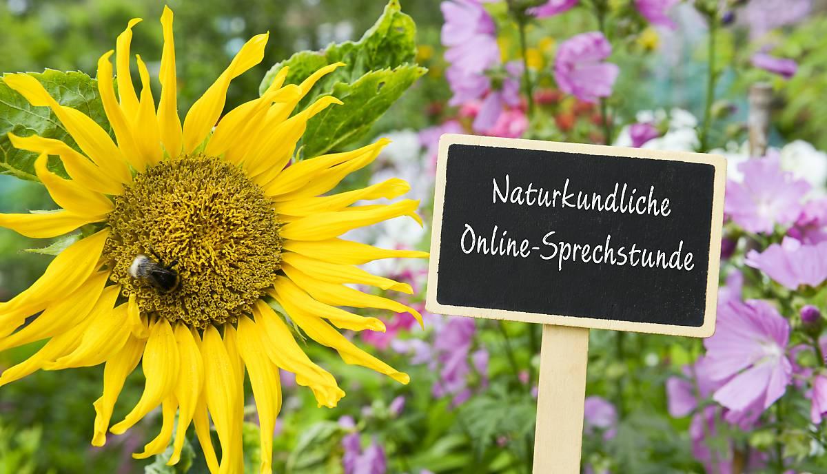 Naturkundliche Online-Sprechstunde
