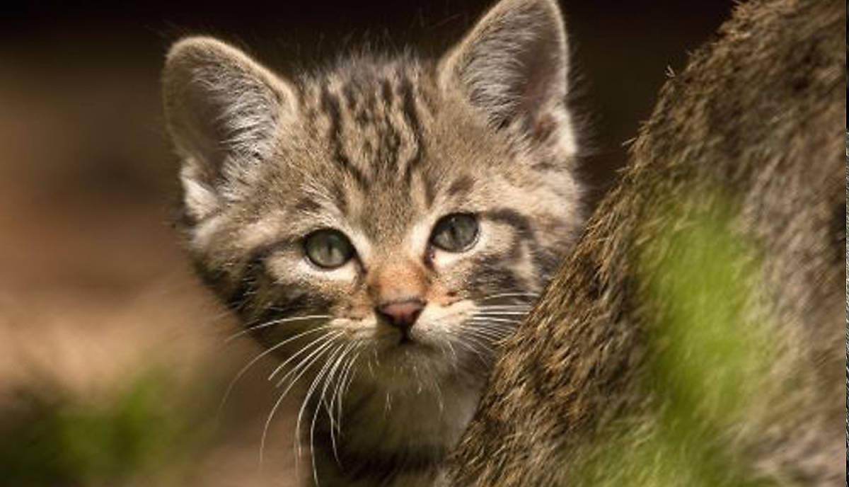 spenden-wildkatzen-test