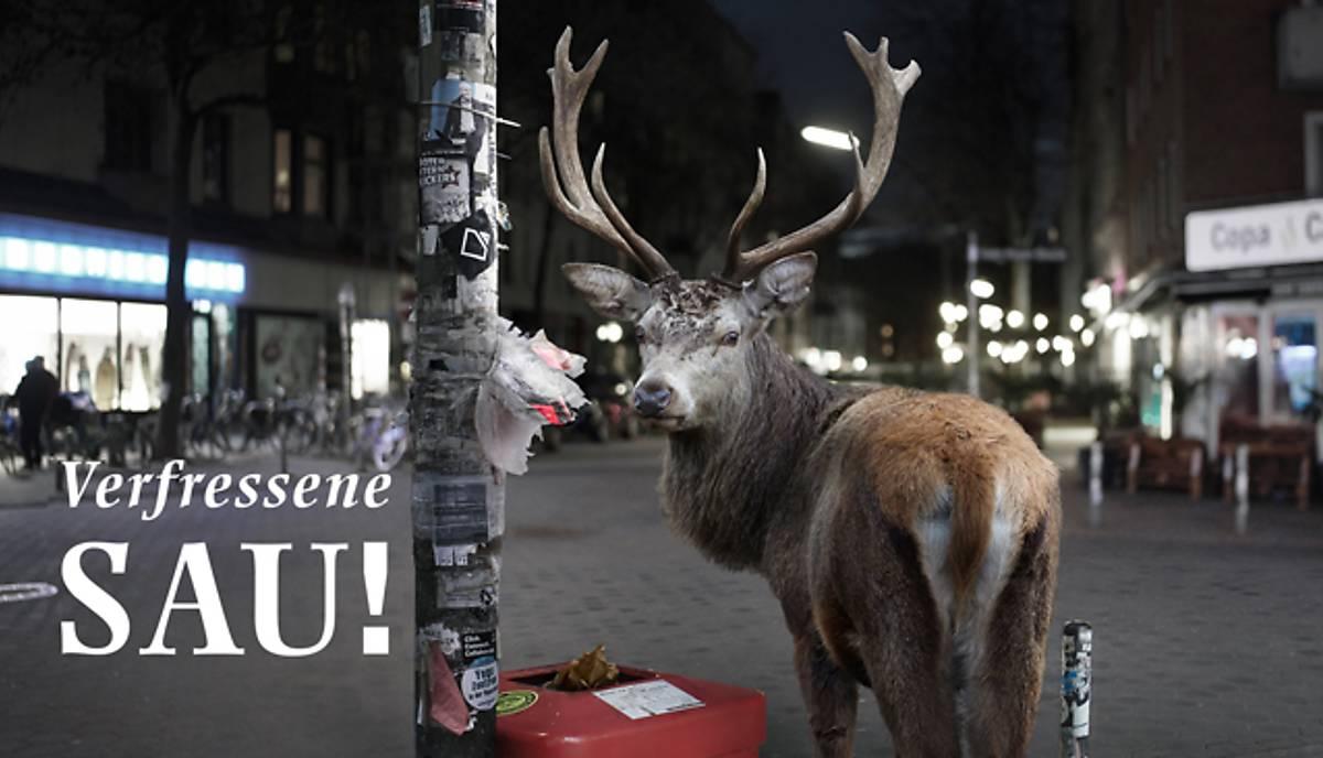 topbild-titel_hirsch-kampagne-petition_28-09-2020