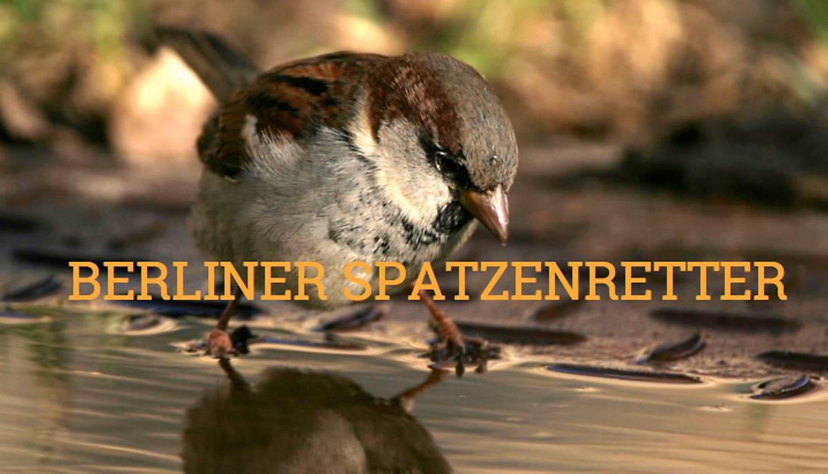 berliner-spatzenretter-de-webseite