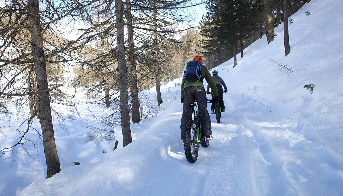 Mountainbiker im Wald (Foto: Imagebroker Meike Engels)