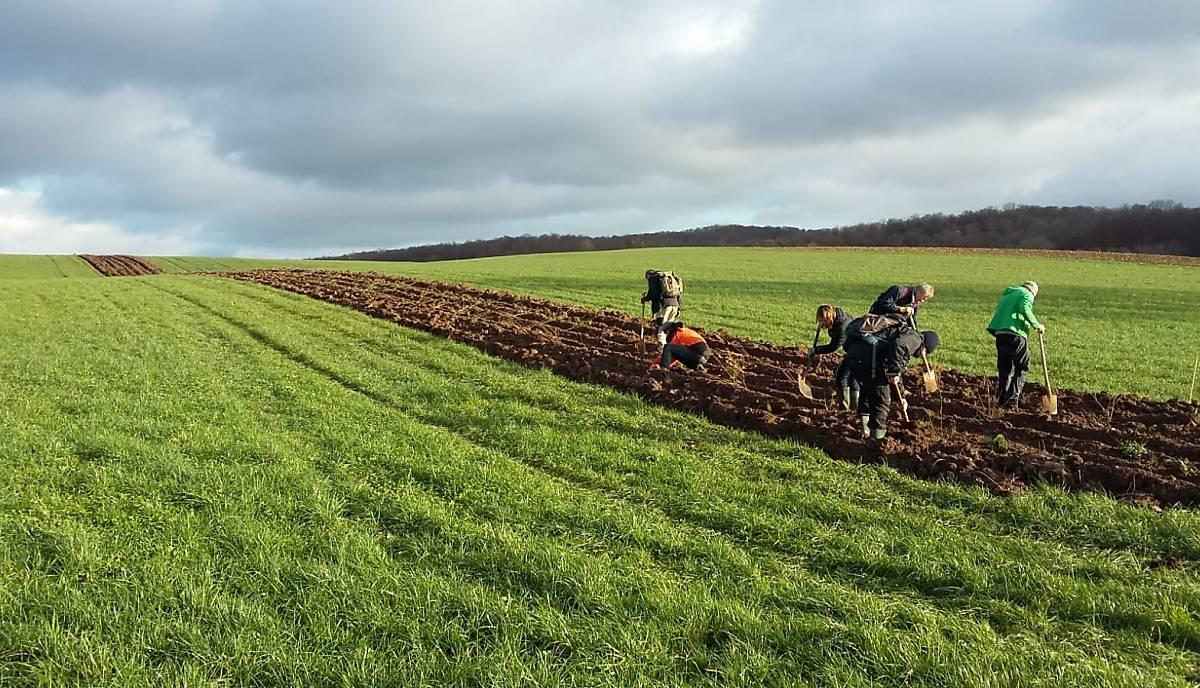 Ausgeräumte Landschaften bieten keinen Raum für Insekten und Co. Mit mehr als 50 Helfern wurde auf den Flächen eines lokalen Landwirtes in Niedersachsen eine Niederhecke für die Artenvielfalt gepflanzt. PARTRIDGE, ein Projekt der Georg-August-Universität Göttingen, unterstützt die Aktion - und wir unterstützen Partridge.  Foto: E. Gottschalk / PARTRIDGE