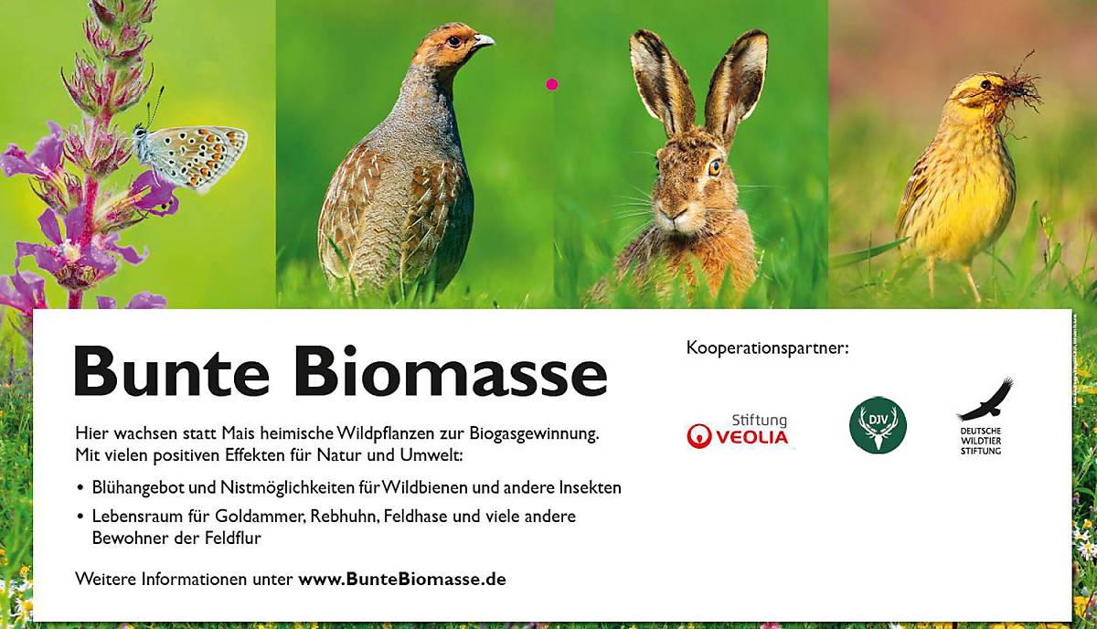 bunte-biomasse