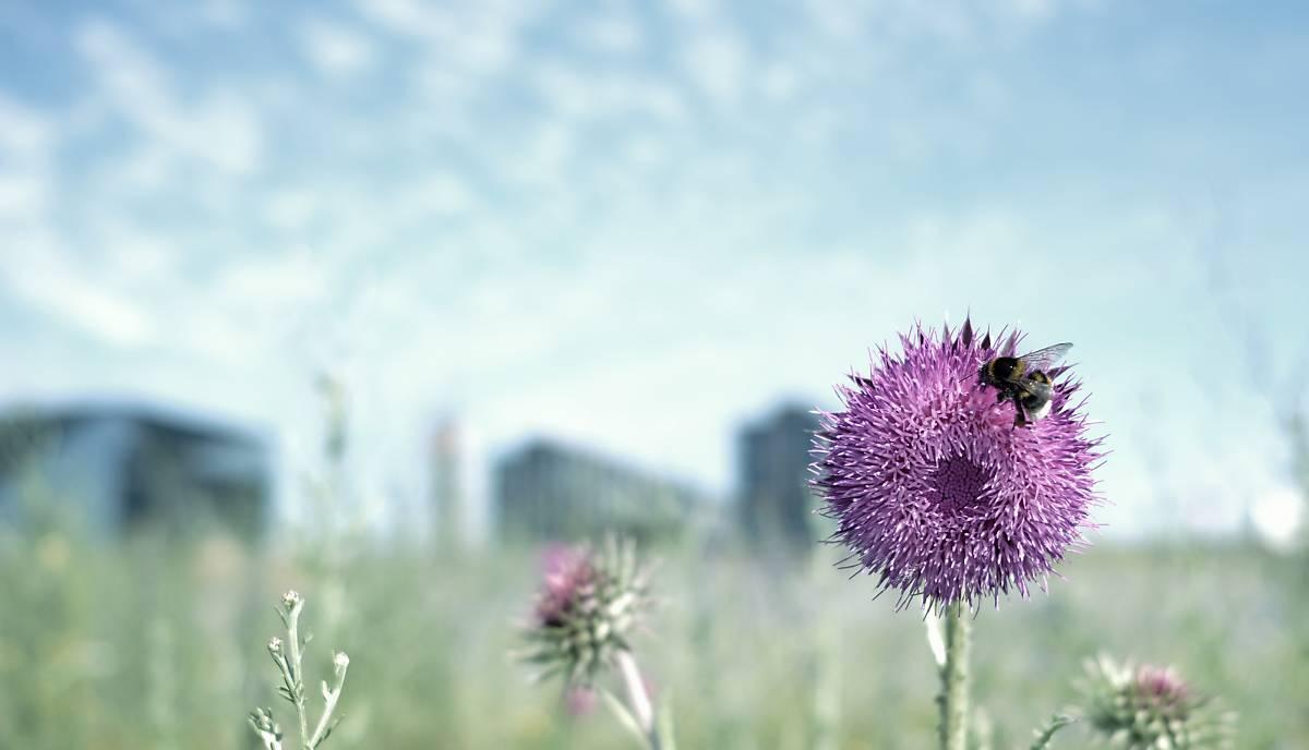 teaser-website-wildbienen