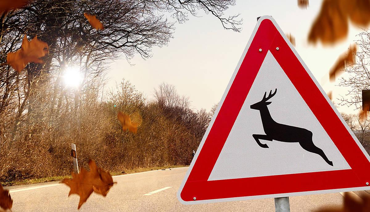 Mit Ihrer Hilfe können Wildunfälle zukünftig an Unfallschwerpunkten reduziert werden.