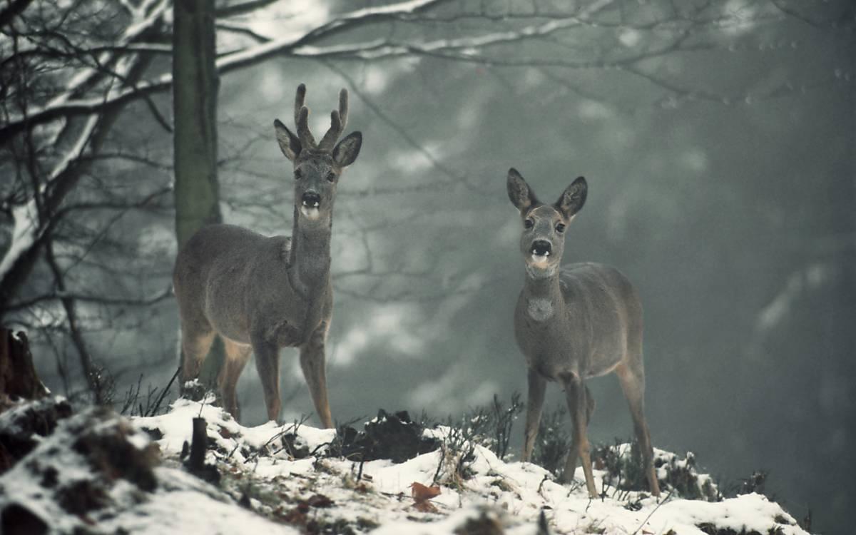 Deutsche Wildtier Stiftung: Wir geben Natur und Wildtieren eine Stimme.