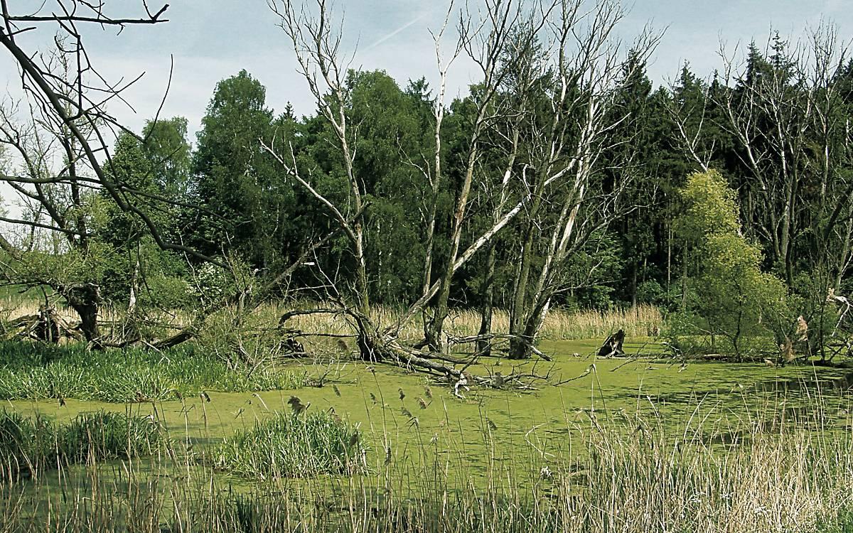 Waldsölle sind typisch in Schreiadler-Lebensräumen