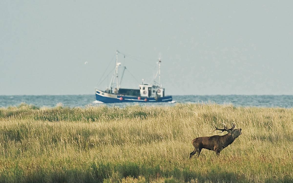 Hirsch vor einem Schiff