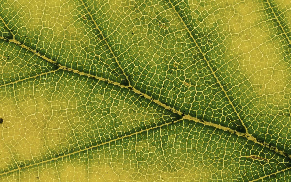 Detailansicht eines Blatts.