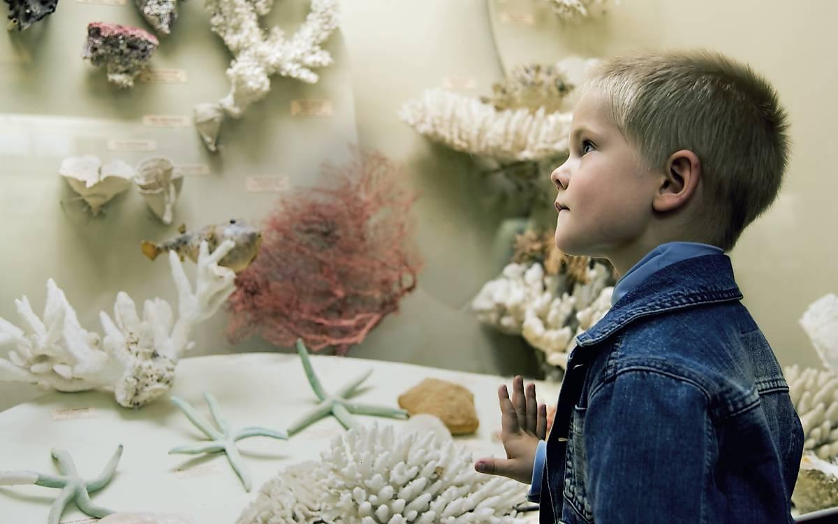 Junge im Naturkundemuseum