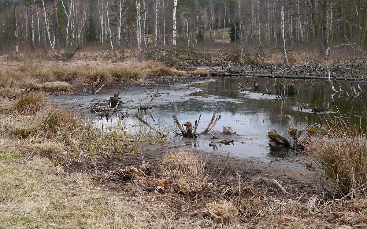niedriger Wasserstand im Hochmoor