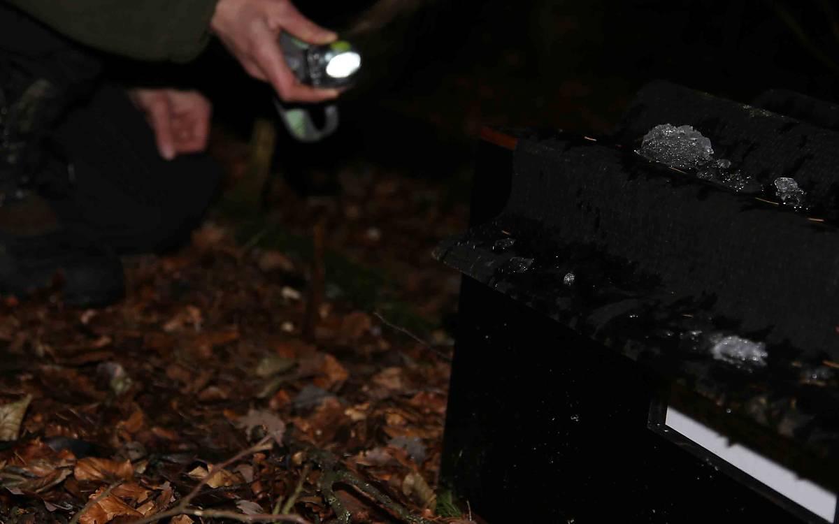 Forscherin überprüft Wildkatzenfalle