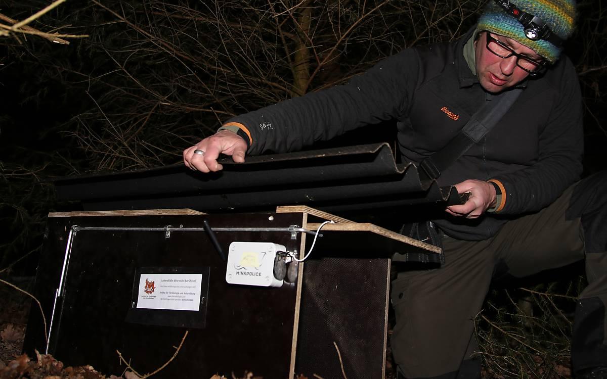 Olaf Simon von Team Soonwald platziert eine Falle an einem versteckten Ort. Der Duft von Baldrian soll die Wildkatzen anlocken.