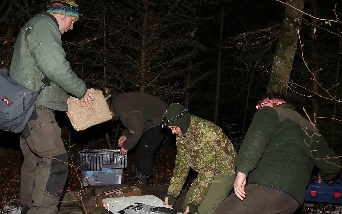Vorbereitungen zur Untersuchung der Wildkatze werden getroffen