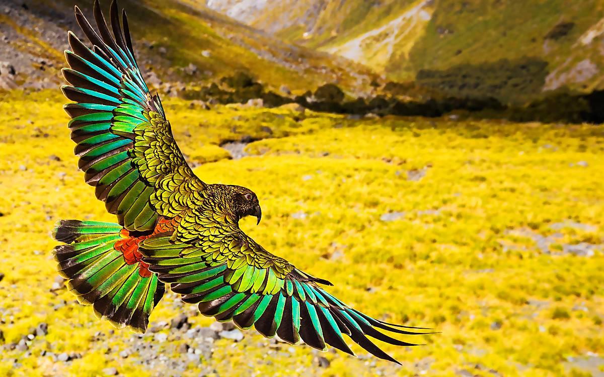 Wildes Neuseeland – Im Reich der Extreme (Regie: Robert Morgenstern)