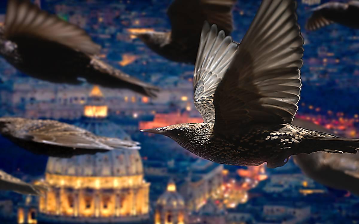 Zugvögel – Kundschafter in fernen Welten (Regie: u. a. Francesca D'Amicis)