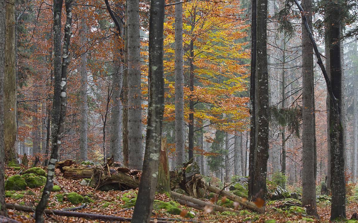 Alter Wald muss geschützt werden