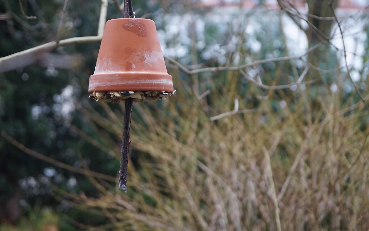 Futterglocke Vogelfutter