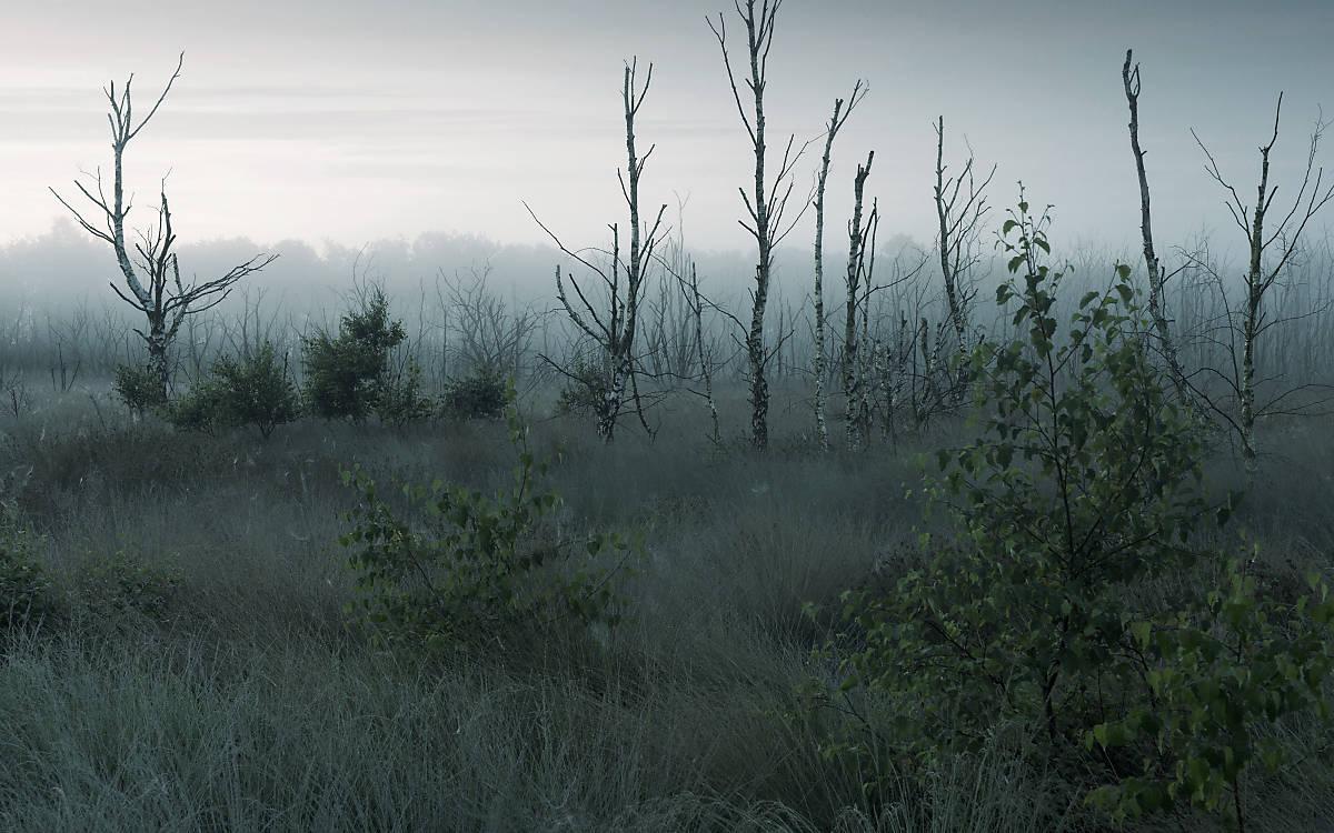 blog_welttag-der-feuchtgebiete_fullscreenheader