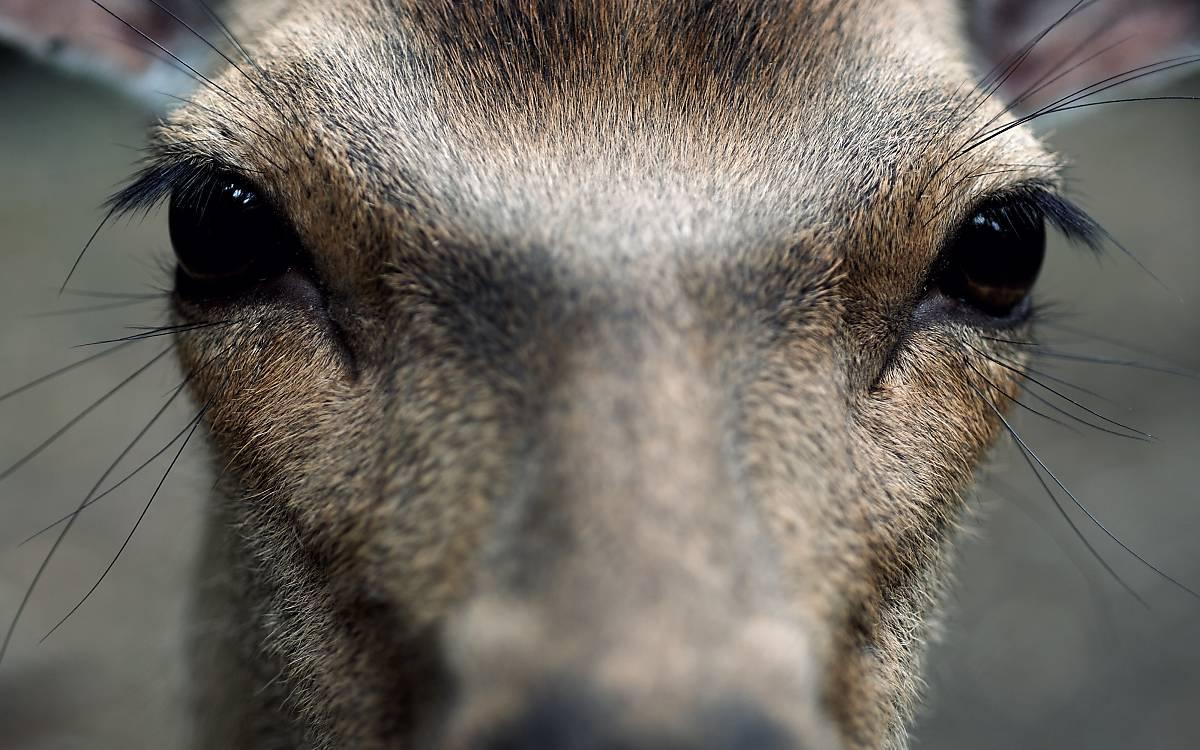 Mit einer Tierpatenschaft unterstützen Sie unser Engagement nachhaltig.