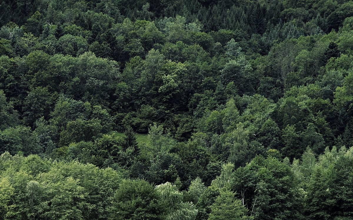 Strukturreicher Nadelmischwald